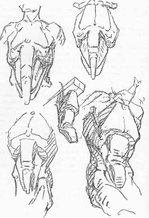 507x743 Draw A Breast Bone