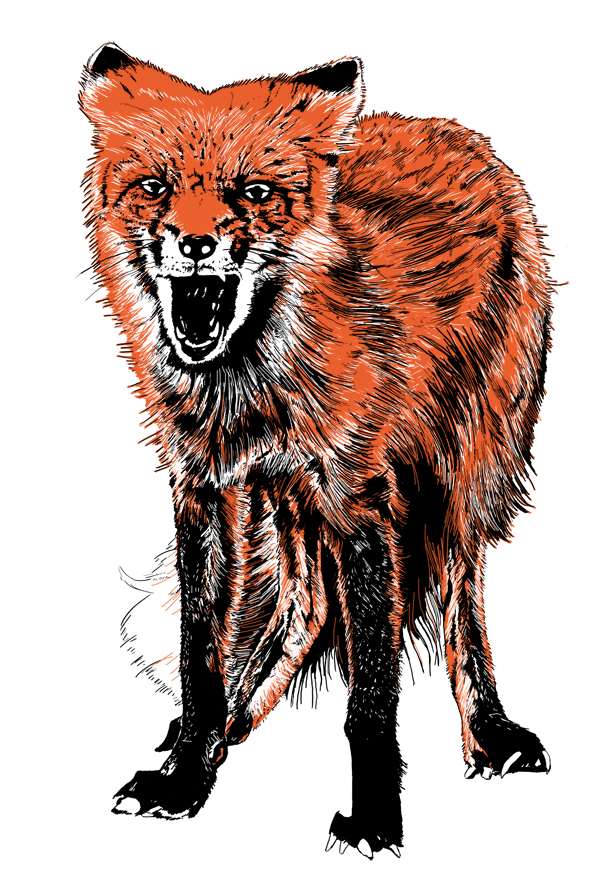 598x875 Collection Of Angry Fox Drawing High Quality, Free Cliparts
