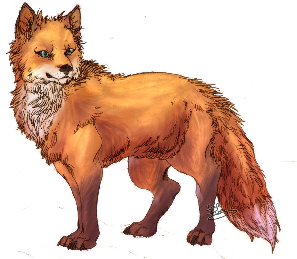 956x835 Red Fox By Izapug