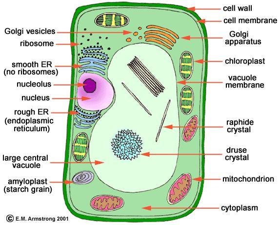 574x460 98 Best Biology For Kids Images On Ap Biology, Life