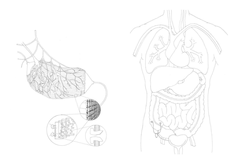 1440x960 Electrocyte Appendix