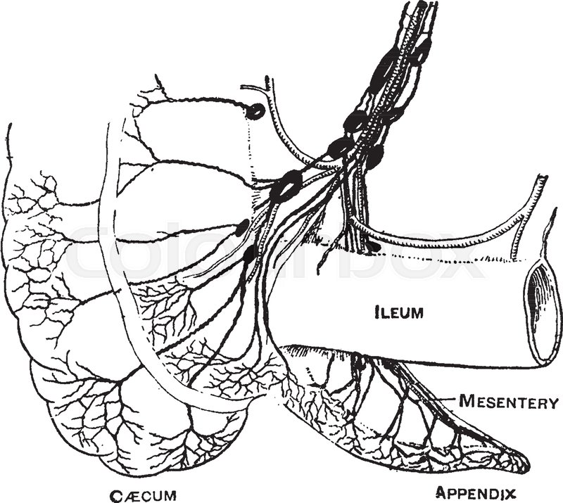800x715 This Diagram Represents Lymphatics Of The Caecum And Appendix