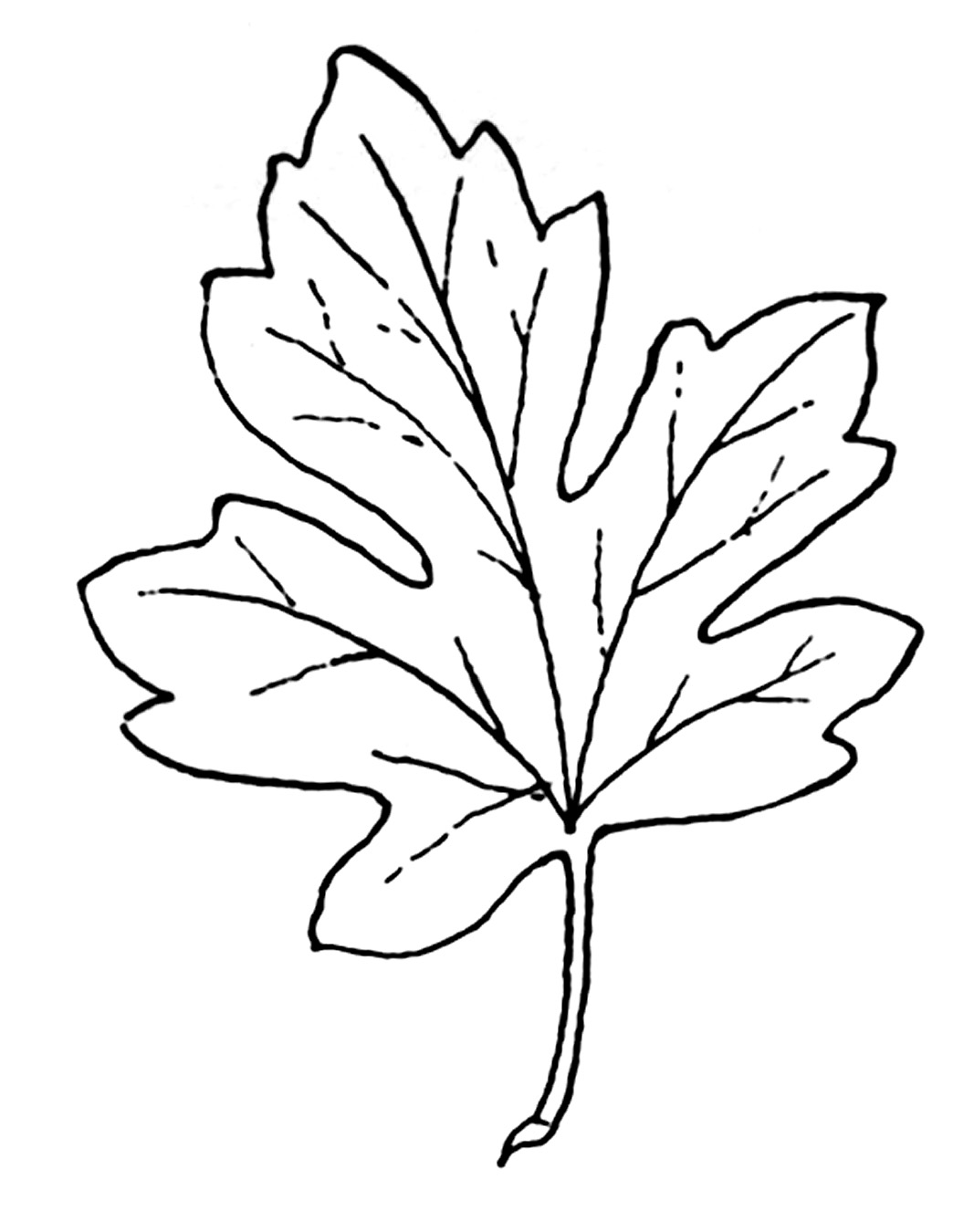 Autumn Leaf Outline Drawing