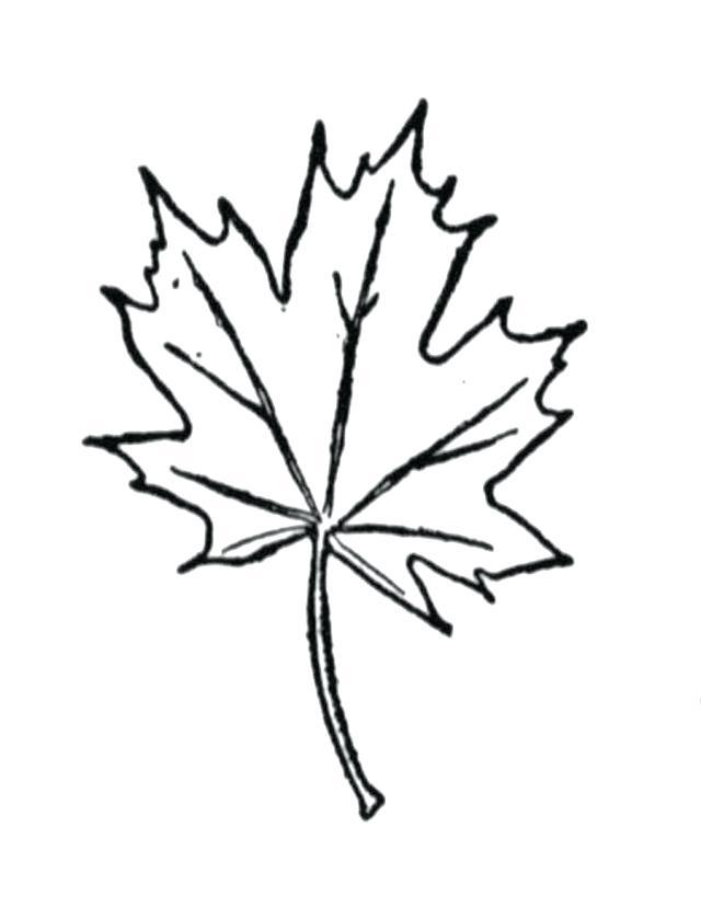 640x839 Autumn Leaves Coloring Page Autumn Leaves Autumn Leaf Outline