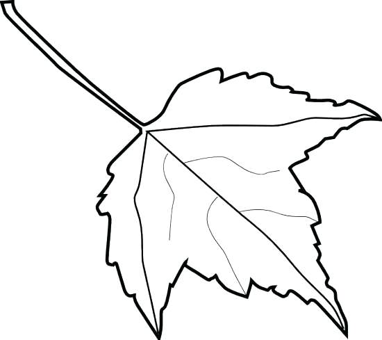 550x489 Fall Leaves Outline S Leaf Autumn Leaf Clipart Outline