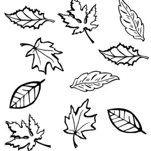 autumn leaf outline drawing at getdrawings com free for personal
