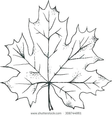 450x466 Autumn Leaves Outline Vector