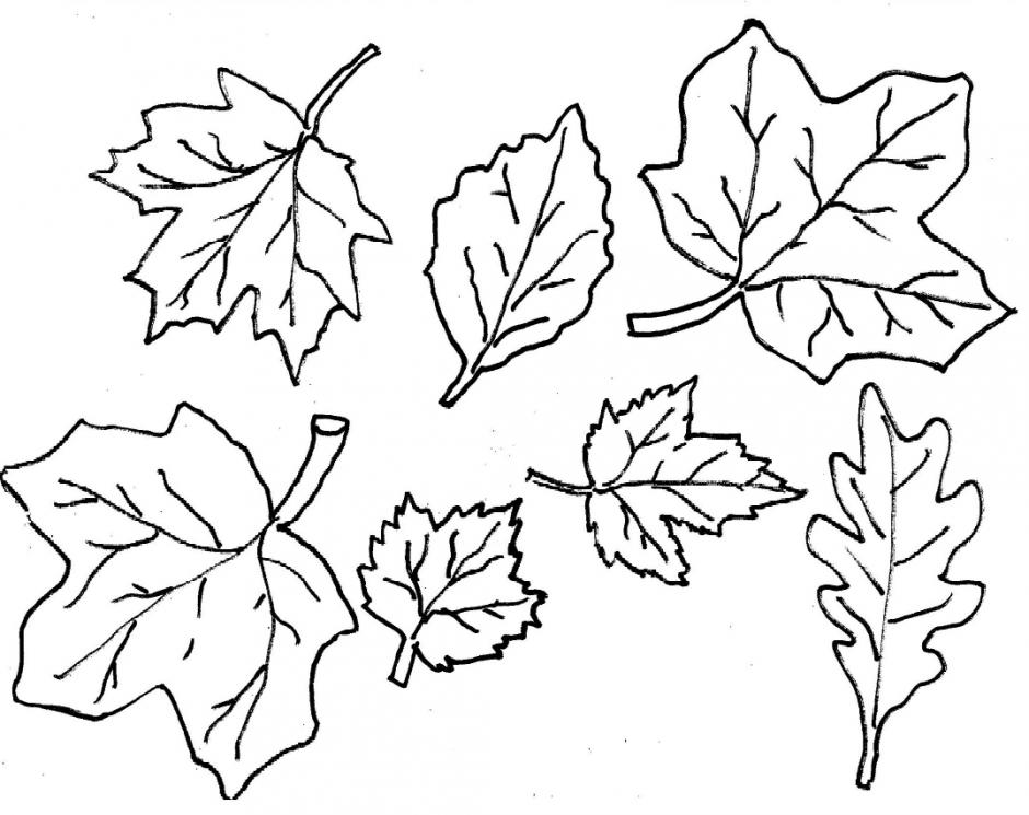 940x745 Clipart Autumn Leaves Color Pages 6 Images Of Autumn Leaf Outline