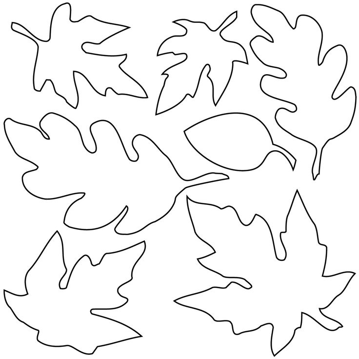 736x736 Fall Leaf Outline 29 Images Of Autumn Leaf Template Printable