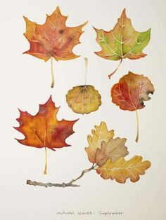 236x314 Autumn Leaves Print, Leaf Varieties, Types Of Leaves, Seeds, Fall