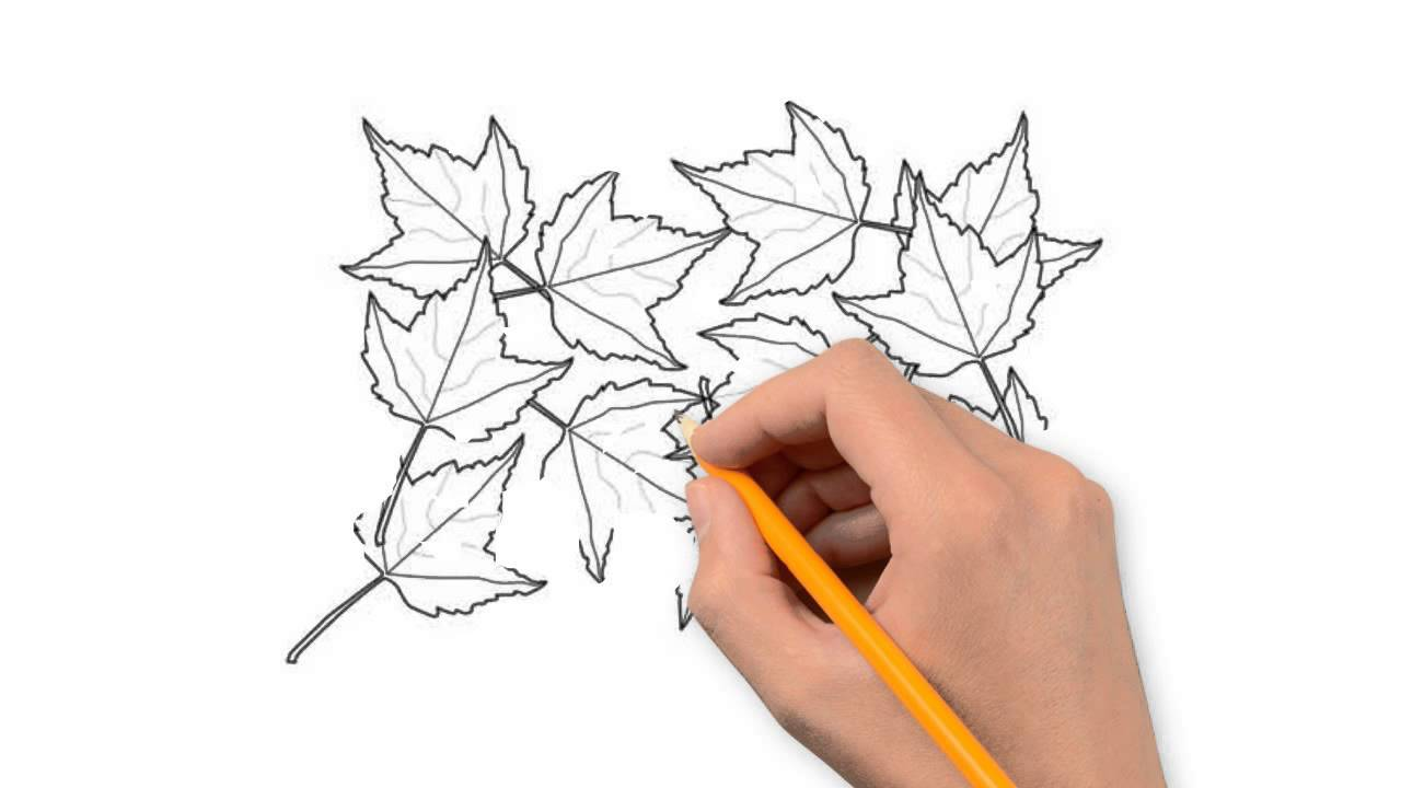 1280x720 Autumn Leaves Nature Pencil To Draw Step By Step