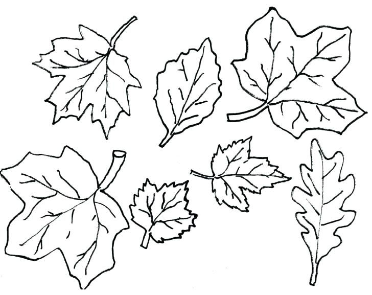 728x577 Autumn Leaf Outline Clipart Kids Coloring Fall Leaves