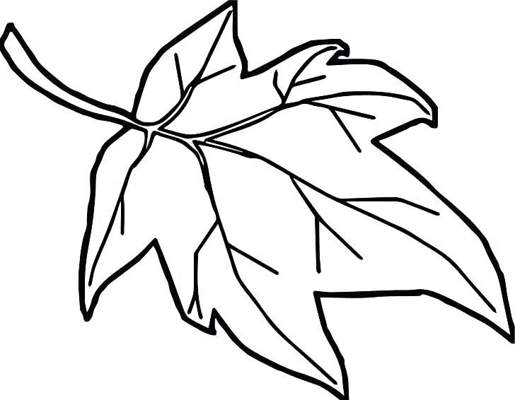 Autumn Leaf Outline Drawing At Getdrawings Com