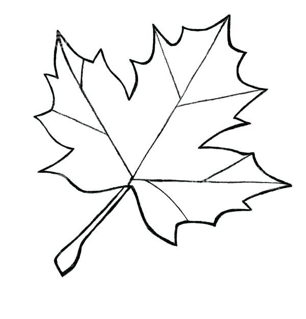 600x624 Autumn Leaf Outline Drawings Image Result For Maple Leaf Pattern