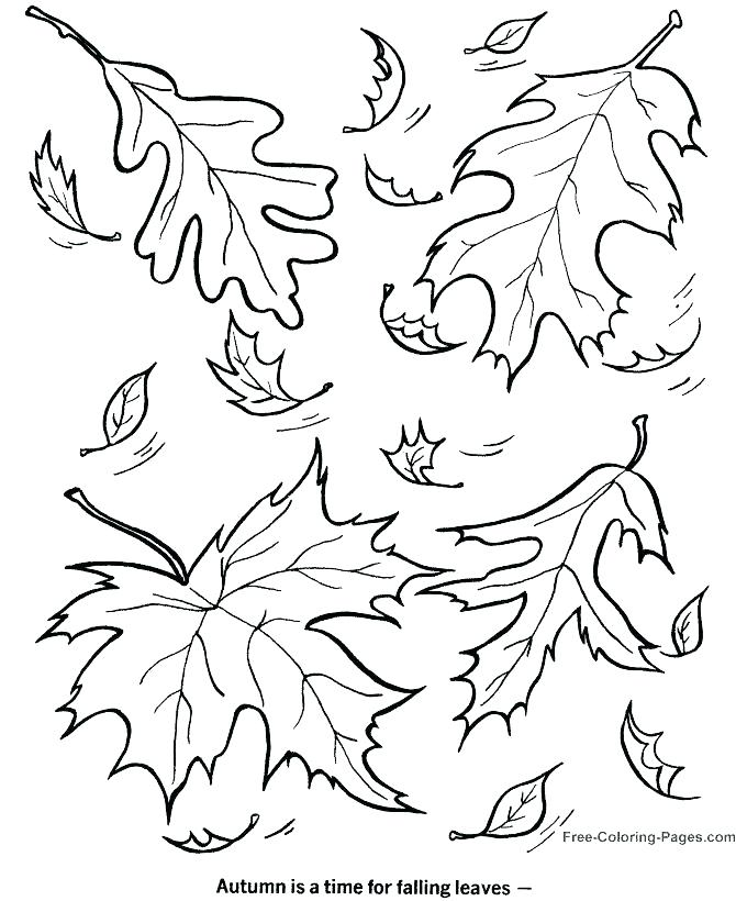 670x820 Autumn Leaf Outline Vector Leaves Coloring Page Maple Leaf Is