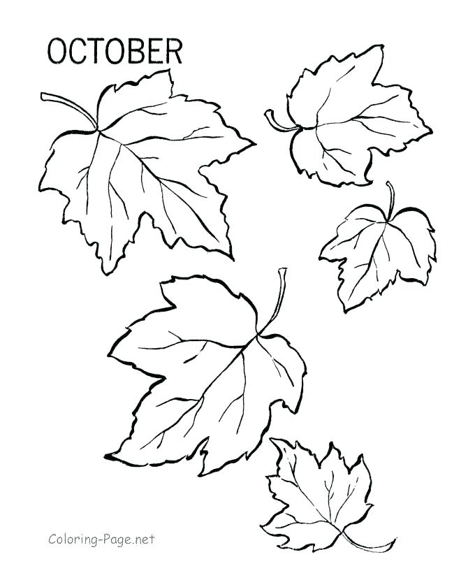 670x820 Fall Foliage Coloring Pages Fall Leaves Coloring Page Fall Leaves