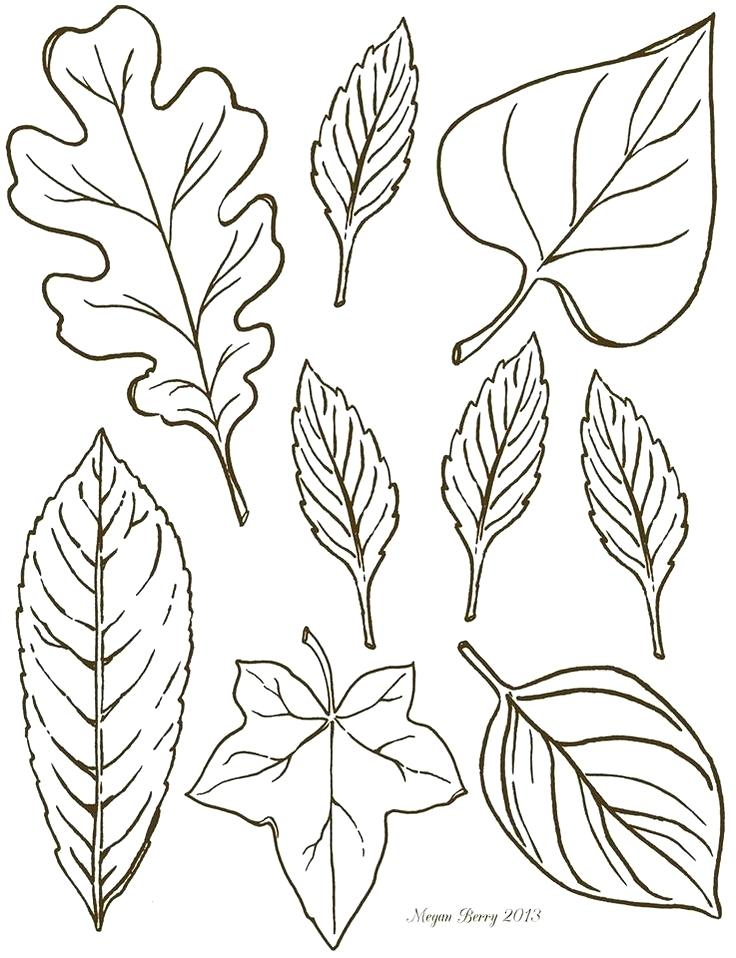 736x958 Fall Leaf Drawing At Free For Personal Use Fall Printable Coloring