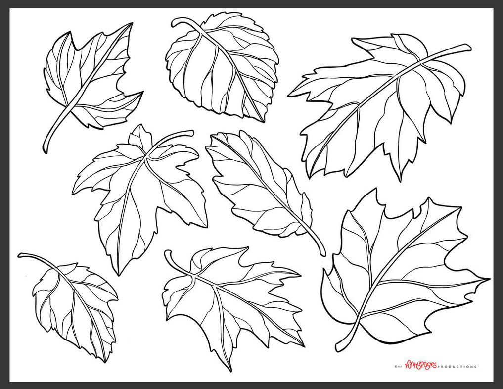 1017x786 Collection Of Fall Leaves Line Drawing High Quality, Free