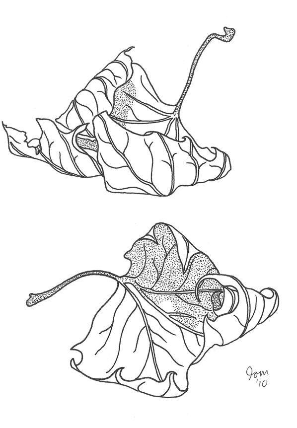 598x862 96 Best Autumn Images On Autumn Leaves, Botany