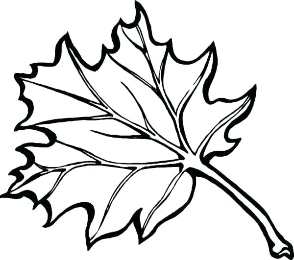 Autumn Leaves Line Drawing At Getdrawings Com