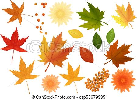 450x330 Beautiful Colourful Realistic Autumn Leaves And Flowers Set