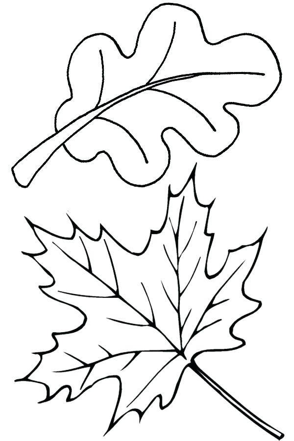 600x900 Coloring Page Leaf Autumn Leaves In Autumn Coloring Page Coloring