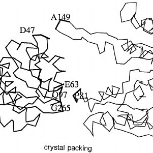 301x301 Backbone Drawing Showing How Crystal Packing Affects The Domain