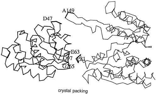 496x301 Backbone Drawing Showing How Crystal Packing Affects The Domain