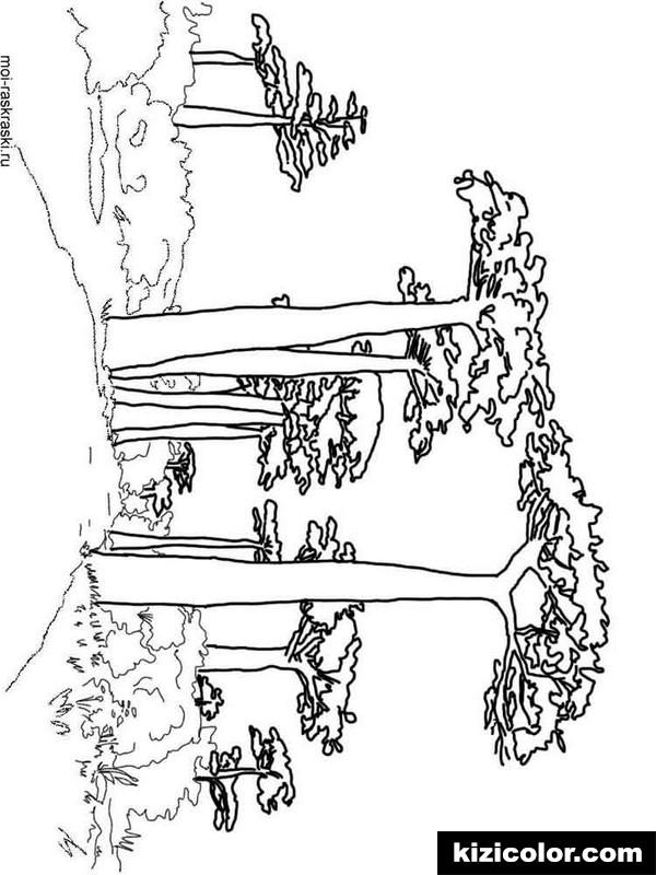 600x800 Baobab Tree 4