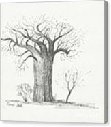 163x186 Lone Baobab Tree Canvas Print Canvas Art By Coral Bell