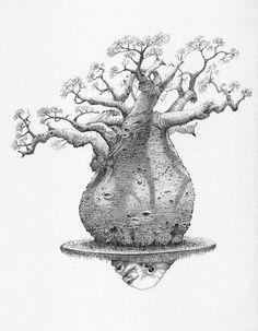 236x303 Baobab Sketch