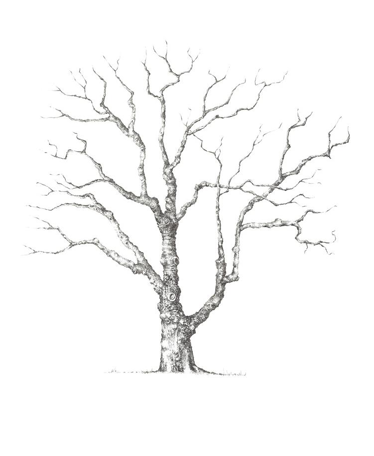 751x917 Baobab