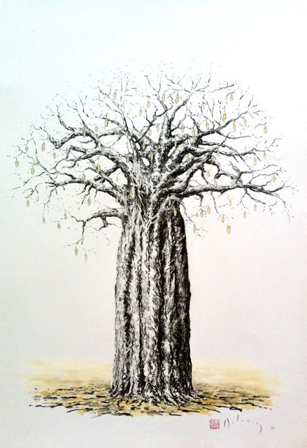 439x640 Charcoal Drawing Of The Suede Pods Hanging On The Baobab. Delaney