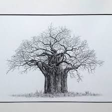 225x225 Image Result For Baobab Tree Drawing My Board