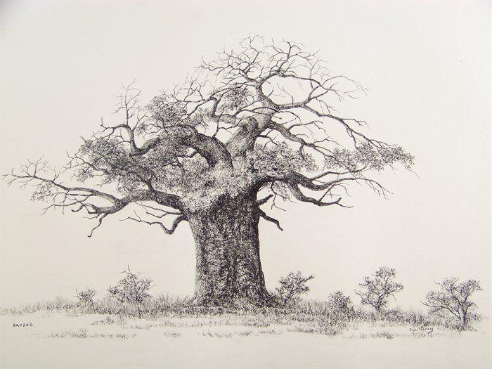 700x525 Baobab Sketch