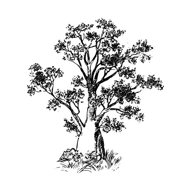 630x630 Baobab Tree