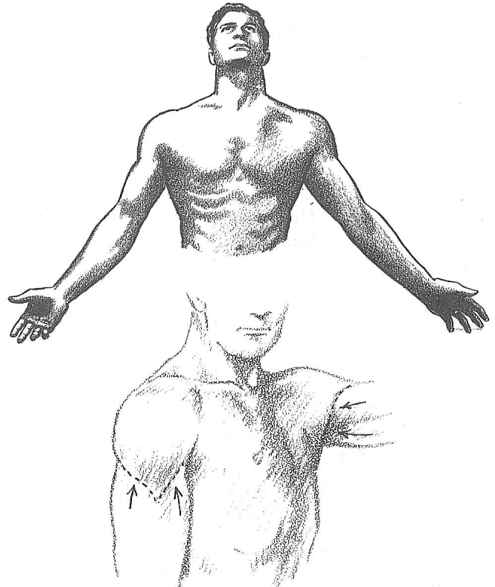 998x1184 How To Draw The Human Torso And Chest