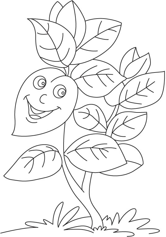 535x765 Basil Coloring Page Basil Plant Coloring Page Download Free Basil