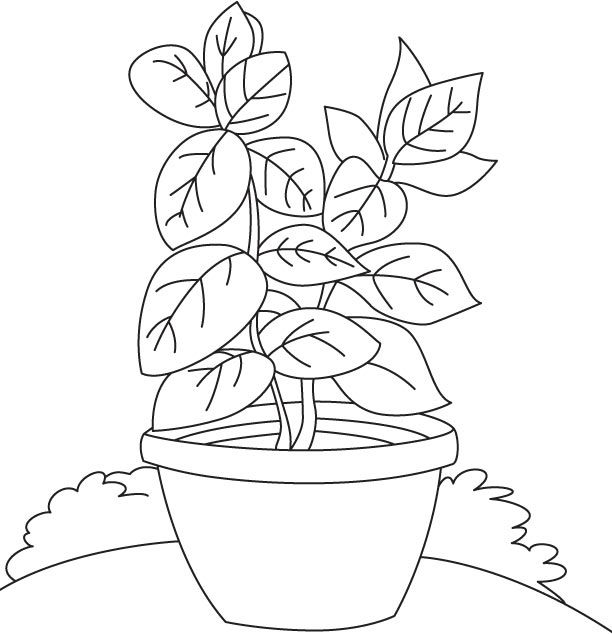 612x634 Basil Coloring Page Basil Vase Coloring Page Projects To Try
