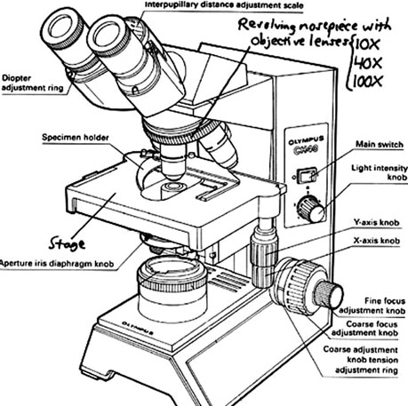 459x457 Collection Of Compound Microscope Drawing With Label High