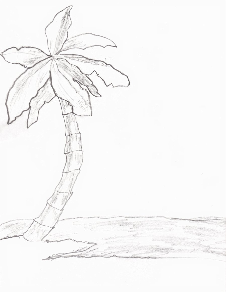900x1161 Collection Of Tumblr Palm Tree Drawing High Quality, Free
