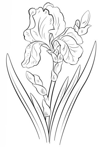 333x480 215 Best Flower Sketch Images Images On Flower