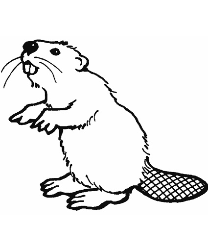 Beaver Drawing Outline
