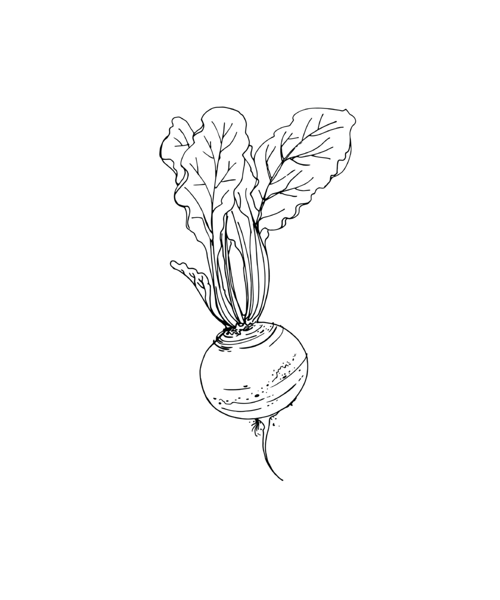Beet Drawing