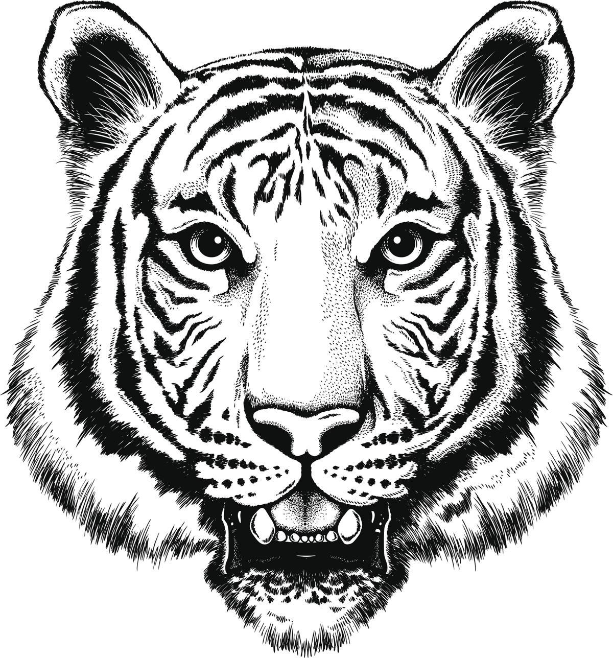 1200x1288 Bengal Tiger Drawing Sketch Of Bengali Tiger Face