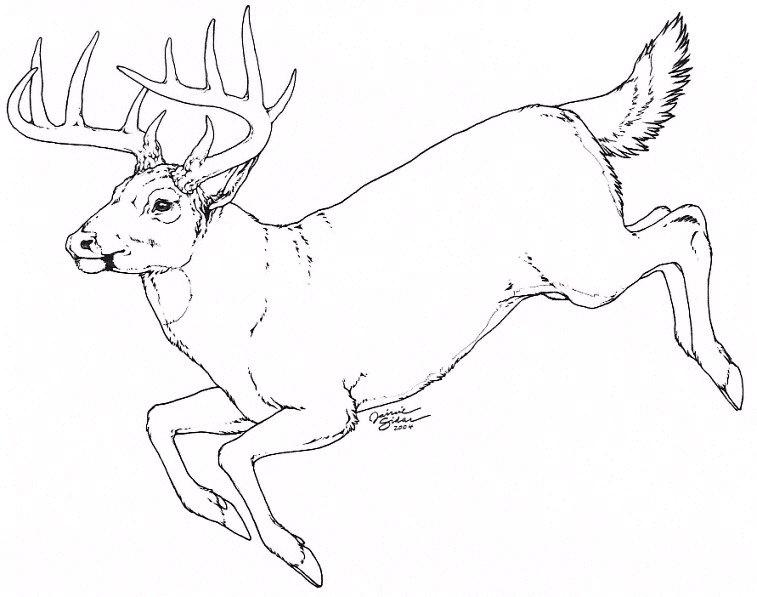 757x597 95 Best Line Art Images On Deer Line Art And Stripes