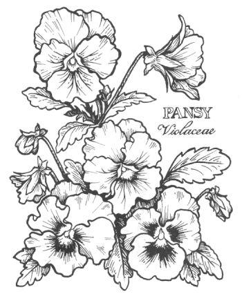 350x426 1410 Best Flower Drawings Images On Flower Drawings