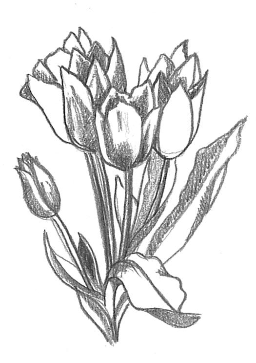 525x743 Flower Sketches