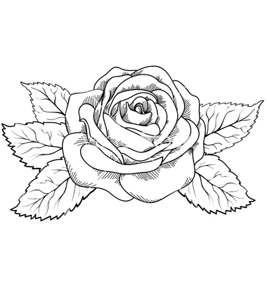 380x400 Collection Of Black And White Rose Drawing High Quality