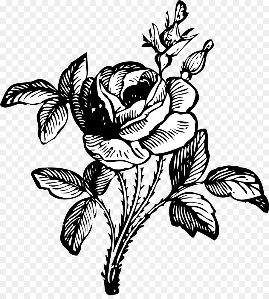 900x1000 Rose Flower Drawing Clip Art